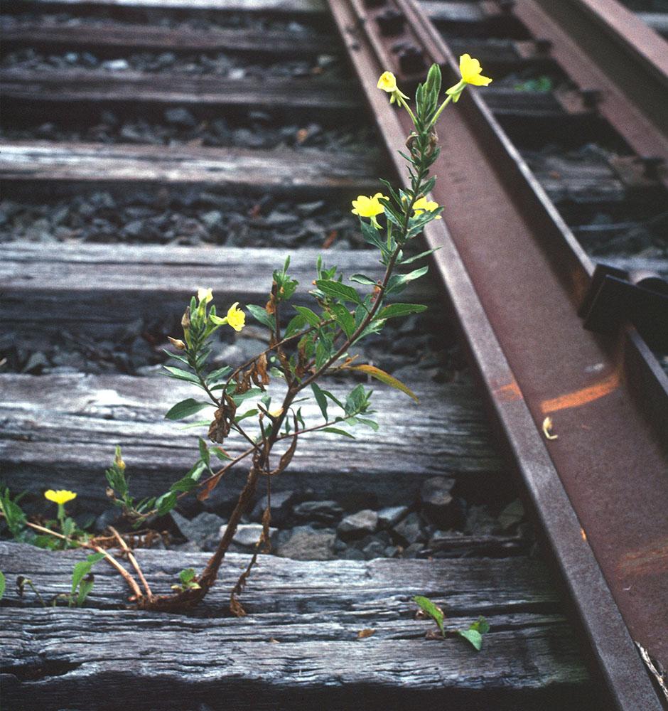 The Railsplitter.jpg